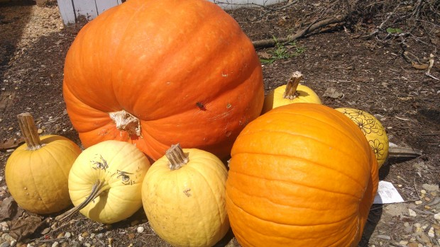 Share some of our favorite pumpkin stories with your students: The Biggest Pumpkin Ever by Steve Kroll and Jeni Bassett or those that are fact-based like How Many Seeds in a Pumpkin? by Margaret McNamara and G. Brian Karas.
